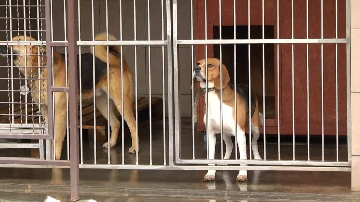 На Львівщині знайшли новий дім для тисячі безпритульних тварин