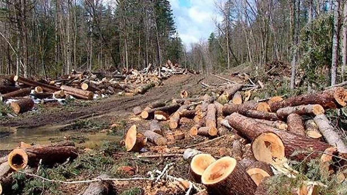 Вырубили лес на 2 миллиона гривен: чиновникам на Львовщине объявили о подозрении