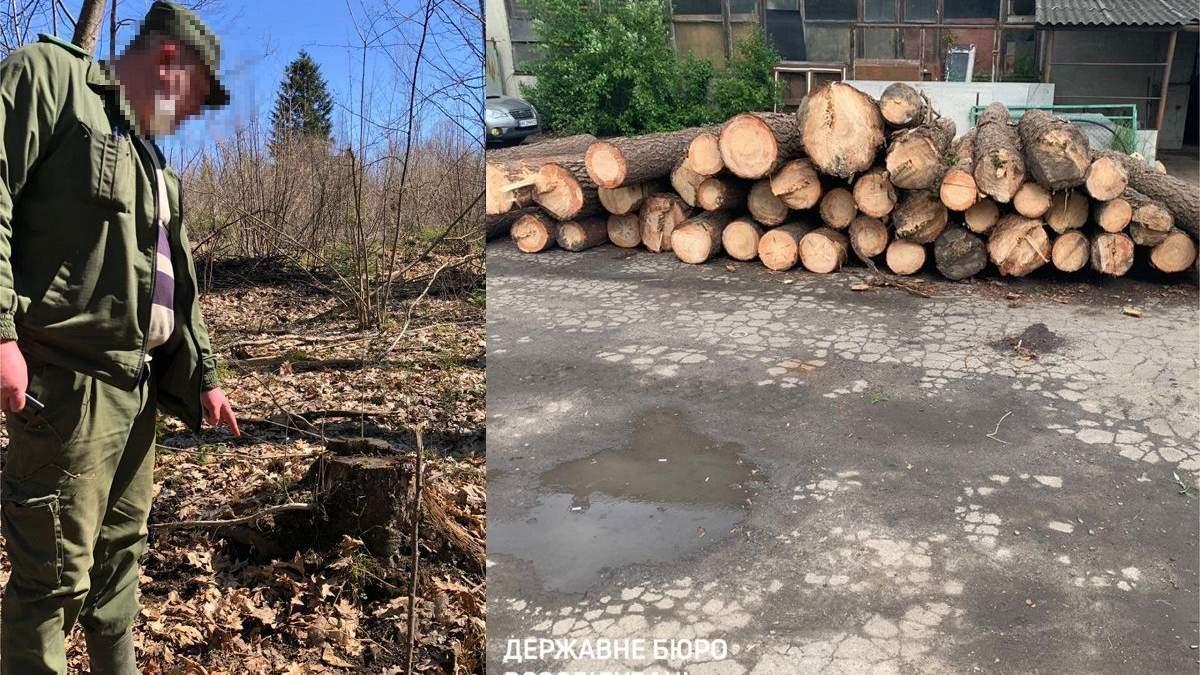 ГБР начало масштабную борьбу с незаконной вырубкой лесов: детали
