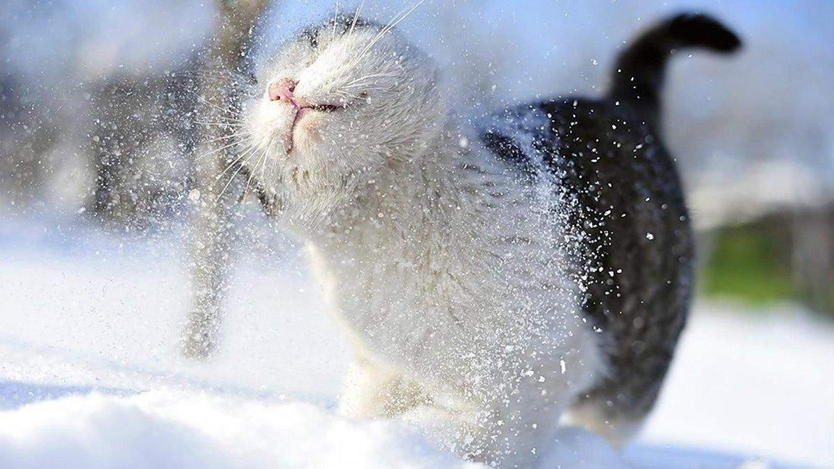 Сніг та ожеледиця: прогноз погоди у Львові та області на 28 січня 2021