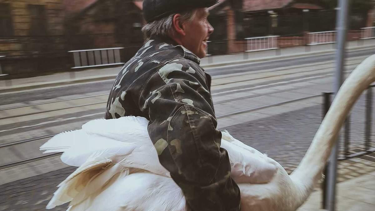 Во Львове из Стрыйского парка убежал лебедь-шипун - смешные фото