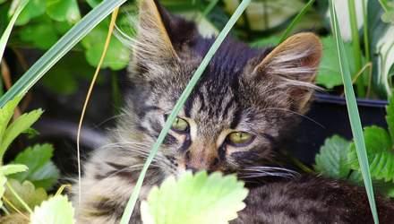 У Львові безкоштовно стерилізуватимуть котів: коли та де