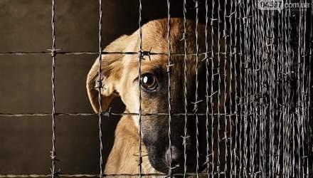 Чоловік у мережі обурився через лайно собак: поліція в його дописі побачила кримінал