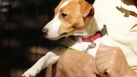 Моторошна знахідка: в одному із сіл Львівщини собаки принесли на подвір'я людську ногу – відео