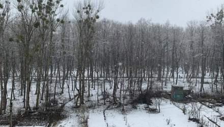 Зима повернулась: Львів знову засипало снігом – фото