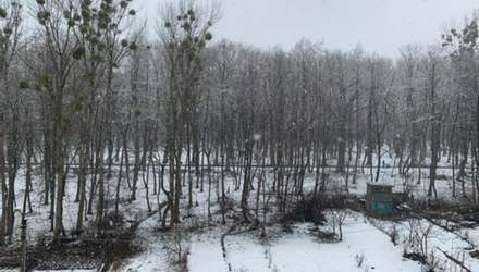 Зима вернулась: Львов снова засыпало снегом – фото